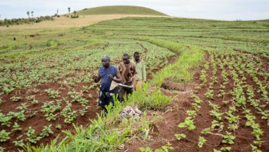 A farm in Nigeria